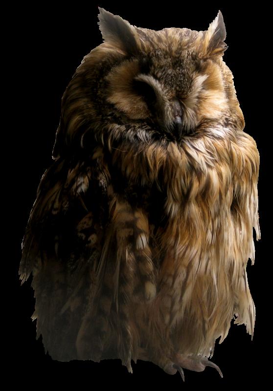 owl_png_by_ahatw7neen-d5syu7u.png