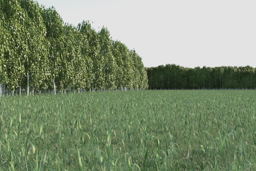 senzafiltro field.jpg