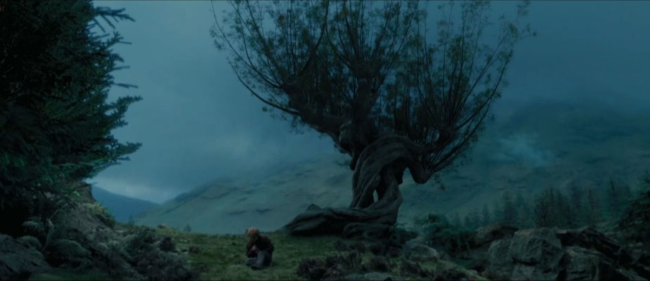 whomping willow wide